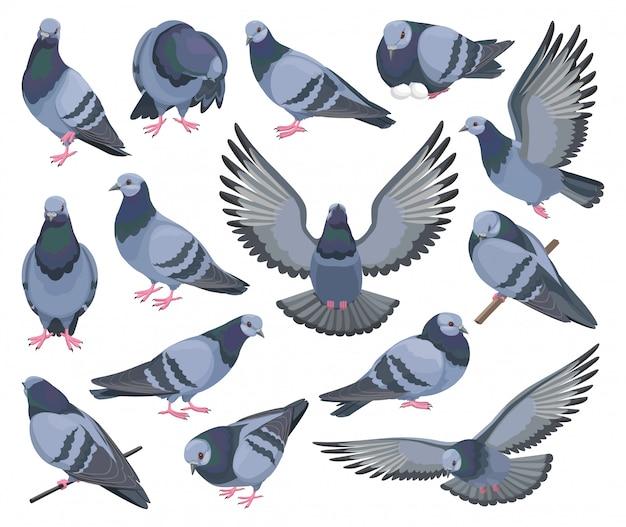 비둘기 새 격리 된 만화 설정된 아이콘입니다. 비둘기 만화 아이콘을 설정합니다. 그림 흰색 배경에 새 비둘기.