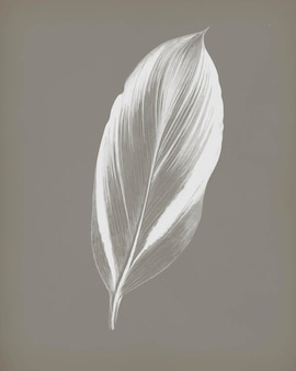ジューシーなトロピカルリーフヴィンテージのドラセナレチーナは、ベンジャミンフォーセットのオリジナルアートワークからリミックスされています。
