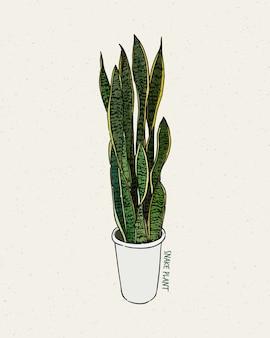 ドラセナtrifasciataは、アスパラガス科、手描きのスケッチで開花植物の種です。
