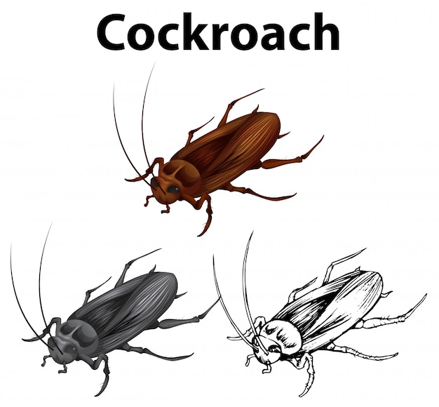Drafting character for cockroach
