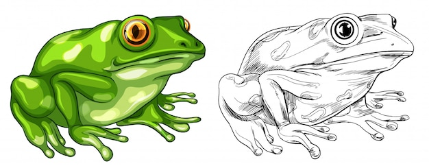 Drafting and colored picture of frog