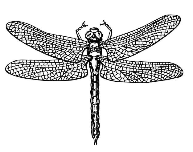 Стрекоза черно-белый рисунок с нежными крыльями векторные иллюстрации эскиз
