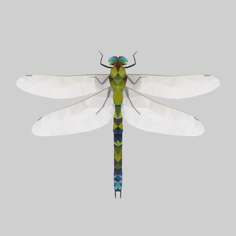 Dragonfly, low poly illustration