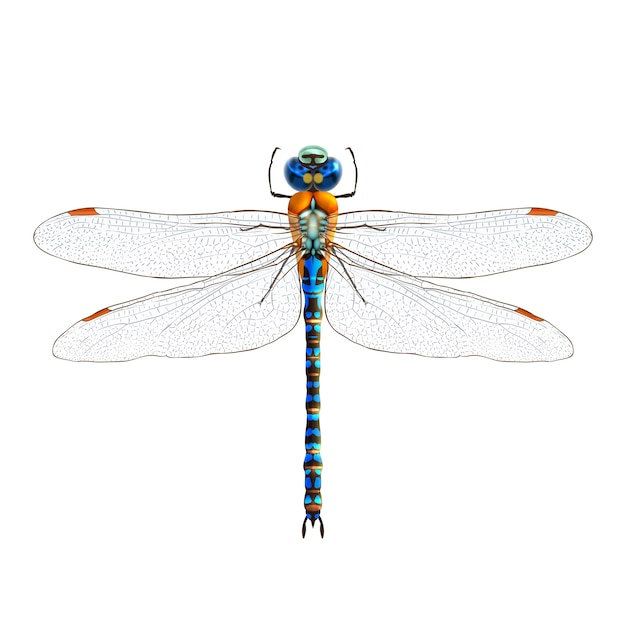 dragonfly vectors photos and psd files free download rh freepik com dragonfly vector image dragon fly vector image