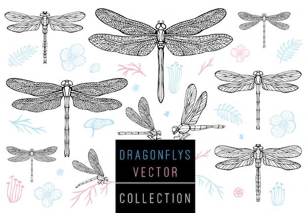 Стрекоза весной установить эскиз стиля коллекции рисованной иллюстрации