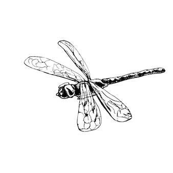 Dragonfly vintage vector hatching black illustration isolated on white background