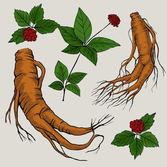 Draw with ginseng plant