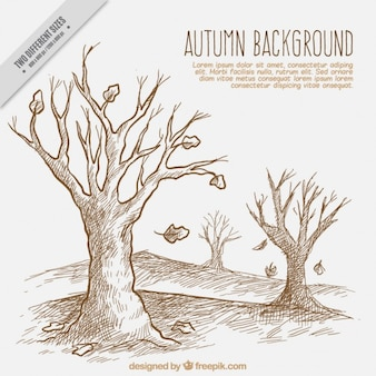 Drawing an autumn landscape