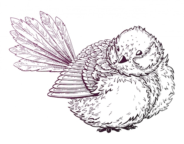 Drawing of a bird.