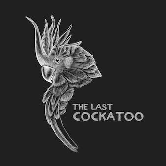 Drawing cockatoo concept