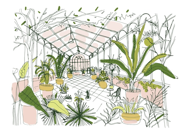 Drawing of interior of tropical botanical garden full of cultivated plants with lush foliage