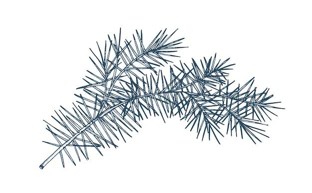 Рисунок еловой ветки с игольчатой листвой