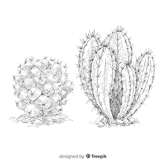 Drawing of two cactus, illustration on black and white for coloring page