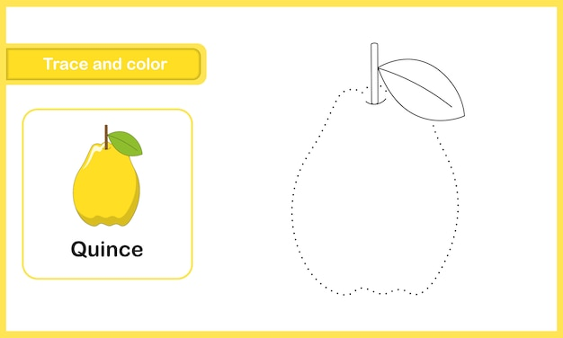Drawing and vocabulary worksheet, trace and colour : quince