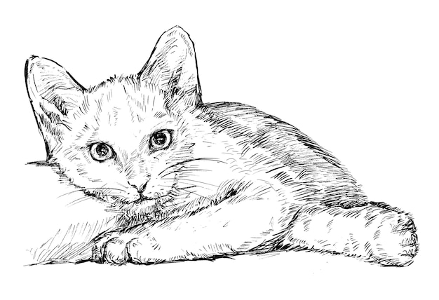 Drawing of the white cat hand draw
