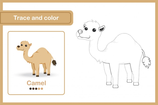 Drawing worksheet for preschool kids, trace and colour : camel