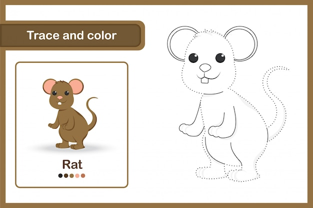Drawing worksheet for preschool kids, trace and colour : rat