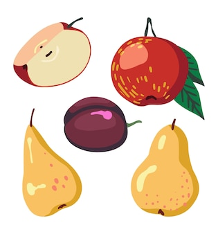 Drawings of tree fruits, apples, plum, pears. set of fall harvest. vector illustrations of autumn season. cartoon colored cliparts collection isolated on white background.