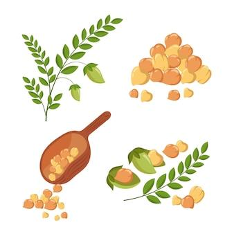 그려진 된 병아리 콩 콩 및 식물