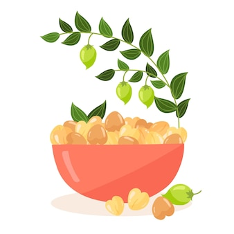 Drawn chickpea beans and plant illustration