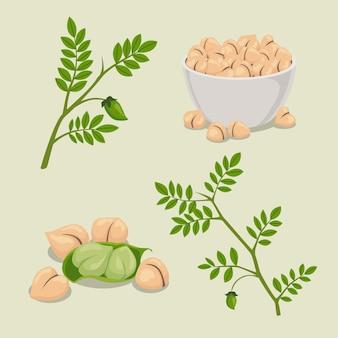 Fagioli di ceci disegnati con l'illustrazione della pianta