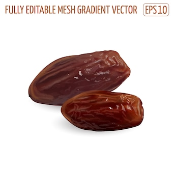 Dried date palm fruits on a white background. realistic illustration.