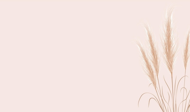 Dried natural pampas grass on beige background.