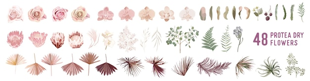 Сушеные пампасные травы, розы, протея, цветы орхидеи, векторные букеты из тропических пальмовых листьев. пастельный акварельный цветочный шаблон изолированной коллекции для свадебного венка, рамок букета, оформления дизайна