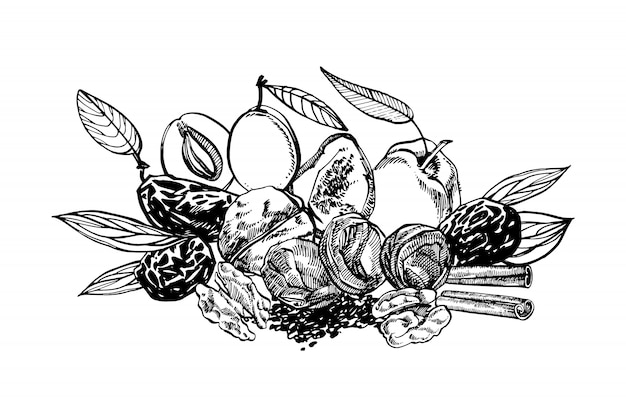 Dried peaches and prunes, plums hand drawn illustration