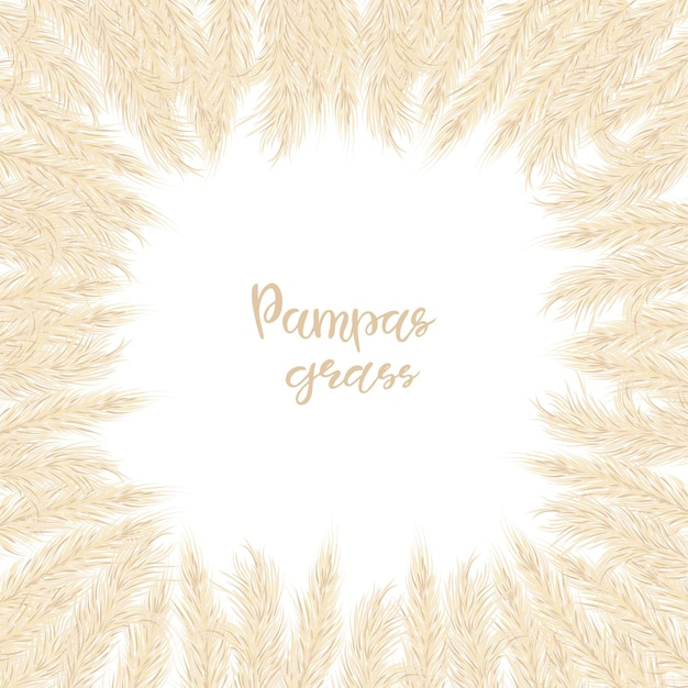Dry pampas grass frame. a place for text, a place for copying. vector illustration. decor. vector illustration.