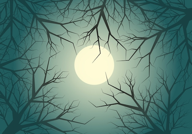 Dry twigs tree jungle moon light sky night background.