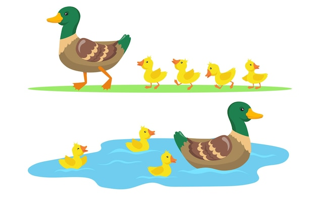 Duck and ducklings set
