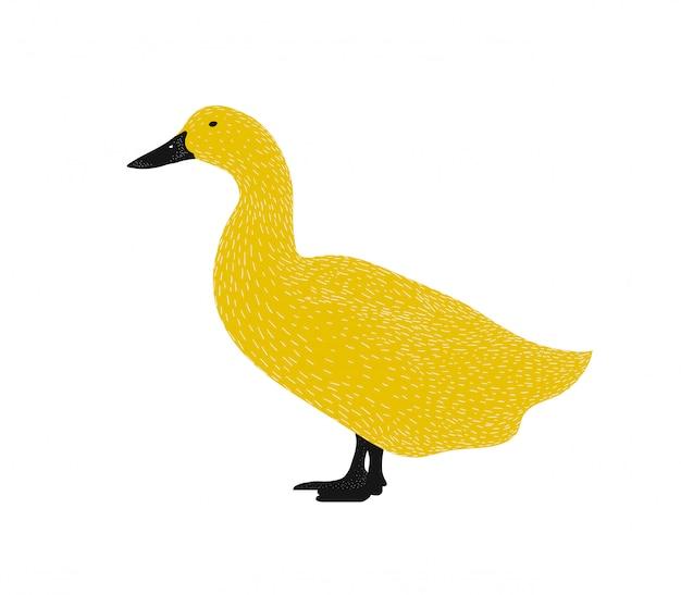 Силуэт иллюстрации утки - изолированная черная и желтая животная иллюстрация.