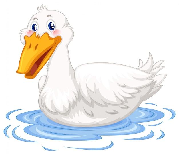 池で泳いでいるアヒル