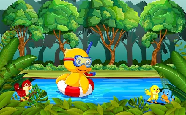 川で泳ぐアヒル