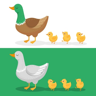 Ducklings and mother duck, ducks family, duckling following mom and walking mallard baby chicks group cartoon