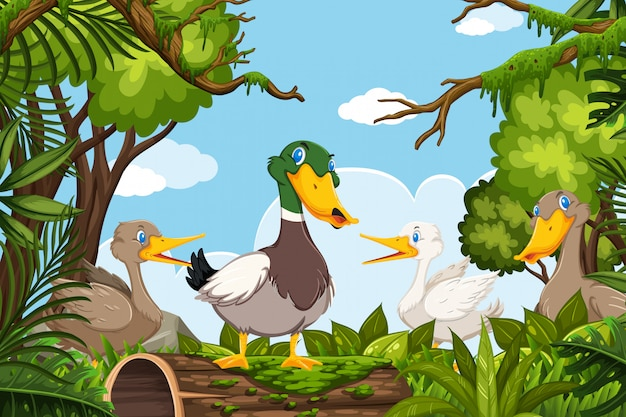 Ducks in jungle scene