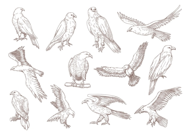 Eagle birds hand drawn sketches.