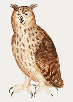 Eagle owl in vintage style