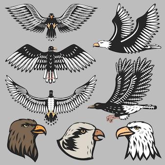 Eagle set on gray