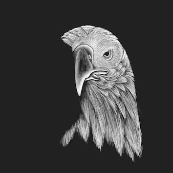 Eagle sketch concept
