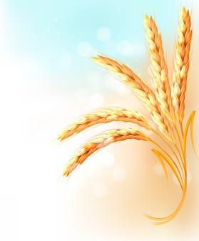 Колосья пшеницы перед голубым небом