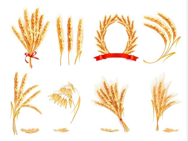小麦、オーツ麦、ライ麦、大麦の穂。ベクトルイラスト。
