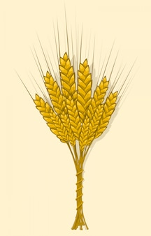 Ears of wheat, barley or rye are woven into one bundle