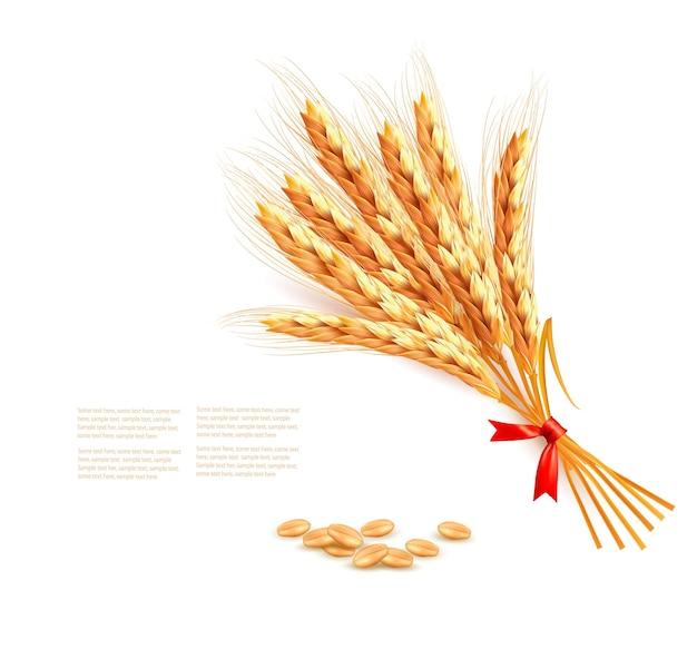 Ears of wheat.  illustration.