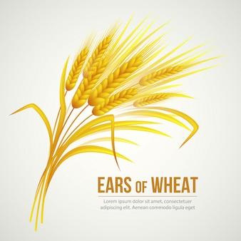 Ears of wheat illustration