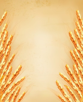 Ears of wheat on old paoer. illustration