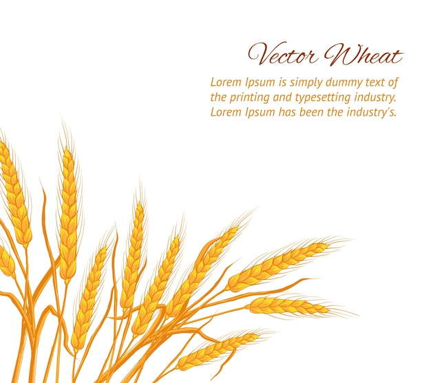 Ears of wheat on white background with sample text template