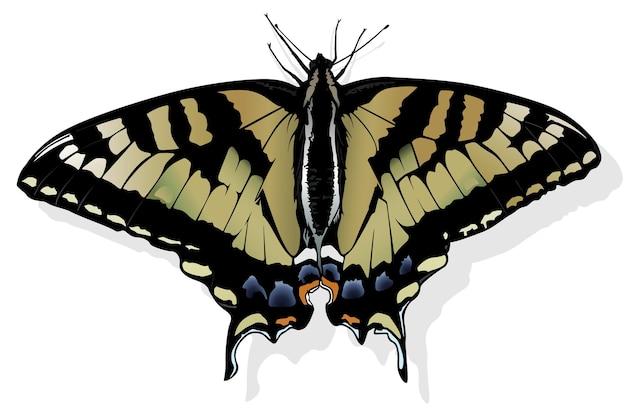 Восточный тигр махаон бабочка papilio glaucus linnaeus