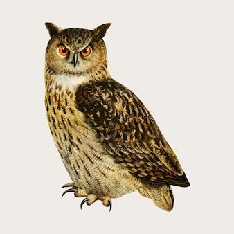 Eaurasian eagle owl bird in hand drawn style